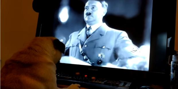 YouTuber guilty of hate crime for teaching dog Nazi salute