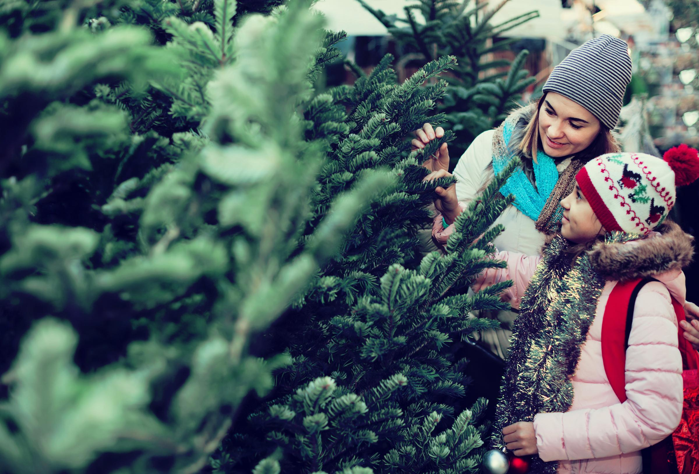 Tips for selecting the ideal Christmas Tree